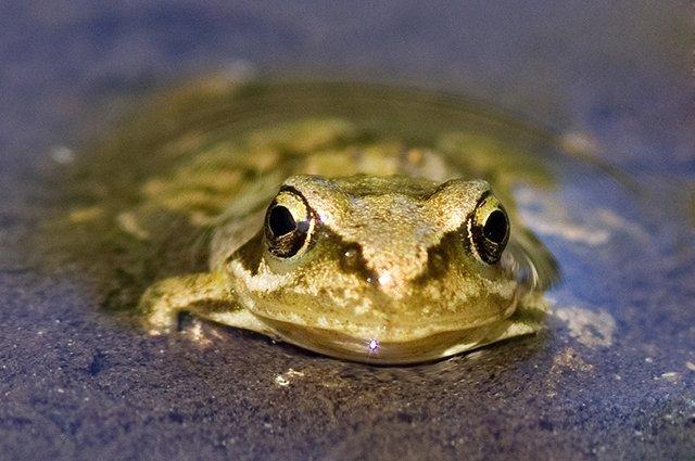 Golden Pond Dweller